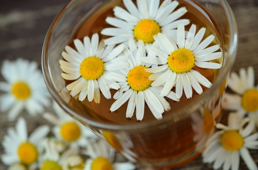 Chamomile floral water : a little hydrosol jew