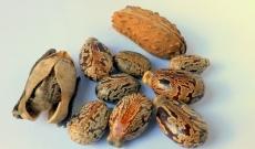 Castor seed oil: a beauty asset for hair!